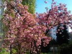 Springtime on the balcony