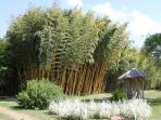 Parc aux Bambous (20 mins)