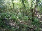 Woodland walk showing the bluebells