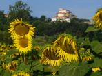 San Ginese Church and Sunflowers