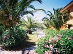 Palms at Marasusa