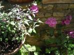 Particolare delle piante aromatiche della 'loggetta'