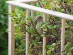 Balcon en primavera
