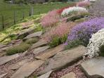 Rock garden in a burst of colour