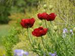 Poppy's in June
