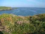 Stunning sea views on your walks