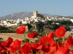 Alhama with June Poppies and La Maroma behind