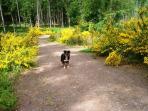 Choilallan Wood Callander Stirlingshire Scotland