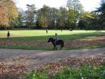 Pony for children (saddle provided)