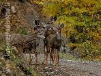 I boschi dell'appennino ricchi di animali selvatici come il daino, la volpe, il cinghiale...