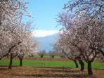 Almond Blossom and the Sierra Nevada mountain range