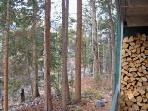 Wall,Fir,Tree,Forest,Vegetation