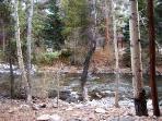 Forest,Vegetation,Outdoors,Grove,Land