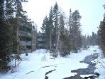 Outdoors,Snow,Forest,Vegetation,Fir