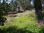 Garden with wild Spring Flowers