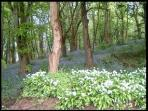 Enchanting woodland walks are on site at Henllys Hall Cottage Apartments