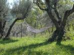 Hammock - perfect for a lazy afternoon