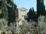 view of the tower from the olive grove
