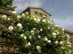 tower with blooming roses
