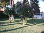 Aree verdi idoneo per il gioco dei bambini e vegetazione curata dal giardiniere
