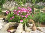Algunas flores del mes de mayo