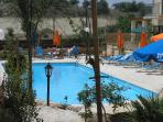 Pool and surrounding garden