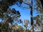 Beautiful sunny view up thru the gum trees from your balcony