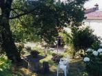angolo giardino superiore