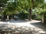 Garden and trees