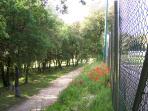 sentieri nel bosco