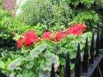 Overlooking the gardens, 21 Cordiner's Land balcony planter box.
