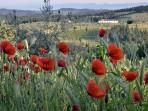 View with poppies over Impruneta from Ancora del Chianti Eco - Friendly B&B in Tuscany