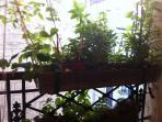 Suspended 'garden'