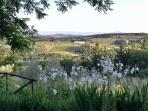 Beautiful Lilies overlooking Chianti Hills from Ancora del Chianti Eco - Friendly B&B in Tuscany
