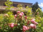 Full Blossom in the garden of Ancora del Chianti Eco - Friendly B&B in Tuscany