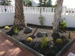 Front Cactus Garden