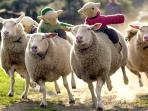 Visit The Big Sheep, ideal for a family day out
