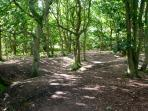 Beautiful woodland walks right outside the property, suitable for cycles, pushchairs & wheelchairs