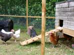 Come and visit our Pigs, chickens and ducks and collect fresh eggs for breakfast.