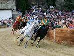 The Palio horse race, 3rd Sunday of June, Piazza Garibaldi,  Castiglion Fiorentino