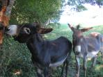 Vanille & Bamboo - always pleased to see you, especially if you have a treat