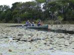 Canoeing and finding colourful tropical birds and wildlife