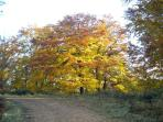 In autumn, wonder at the wonderful range of colours