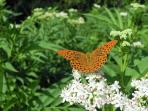 In spring and summer there's an amazing profusion of butterflies, here there are no pesticides