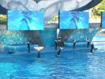 The Shamu show at Seaworld