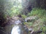 piccolo ruscello del laghetto