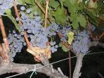 The house is in the prestigous wine region of the Priorat