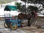 Donkey Taxi at Mijas Pueblo