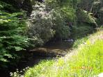 Burn 200m away. Watch the brown trout