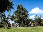 Le Jardin avec sa collection de palmiers